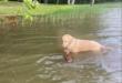 كلب ينقذ غزال من الغرق ويصبح حديث السوشيال ميديا