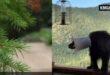 أمريكيان ينقذان دب علق 'دلو' برأسه لأكثر من أسبوع