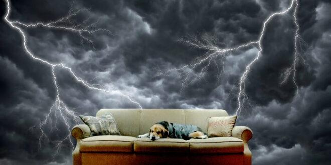 لماذا تصاب الكلاب بالفزع خلال العواصف الرعدية؟