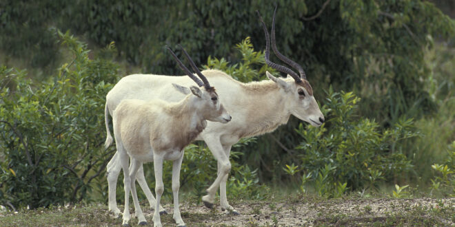 معظمها يتميز بجمال استثنائي.. 12 من الحيوانات الأكثر ندرة في العالم