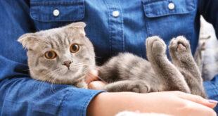التعامل المباشر مع القطط قد يزيد خطر الإصابة بمرض الذهان