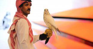 بيع أغلى صقر 'جير' بالعالم بمزاد فى السعودية