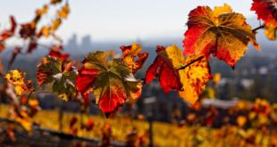 طقس الخريف قد يخدعك.. 10 نصائح للوقاية من الأمراض الناتجة عنه