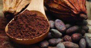 فوائد مذهلة يقدمها الكاكاو لصحة القلب والأوعية الدموية
