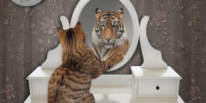 تتشاركان 96% من الجينات.. لماذا لا تستطيع القطط المنزلية الزئير كسائر أنواع القطط البرية؟