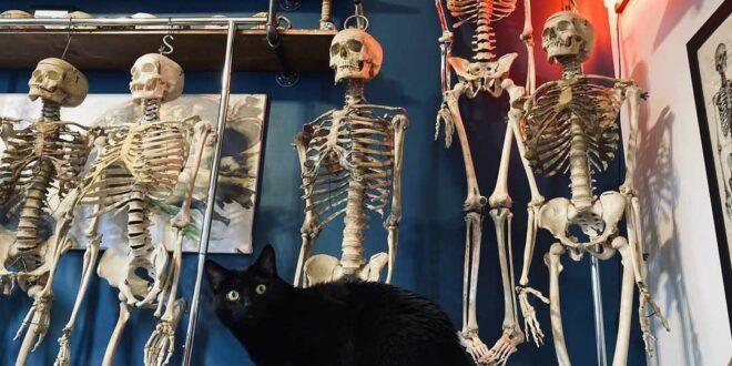 """شاب أمريكي يفتح محلاً لبيع عظام بشرية حقيقية! تحوَّل لنجم على """"تيك توك""""، وهكذا يرد على منتقديه"""