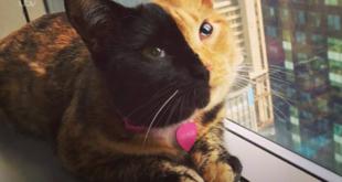 """قطة ذات وجهين تأسر قلوب رواد """"تيك توك"""".. مقطع فيديو يؤكد أنها حقيقية يحصد ملايين المشاهدات"""